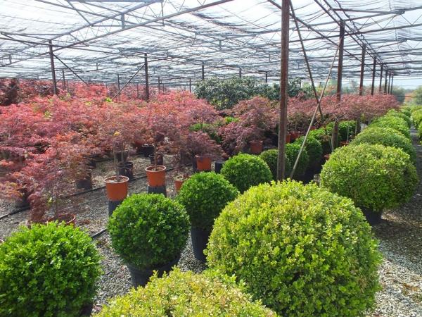 Plante interior exterior ilfov Plante decorative